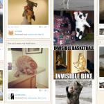 Catmoji: Social Network voor katten